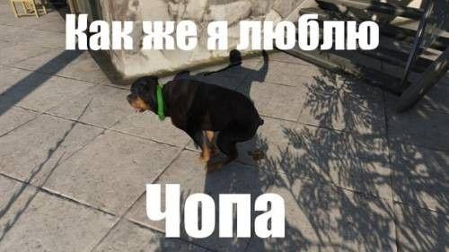 Люблю Чопа