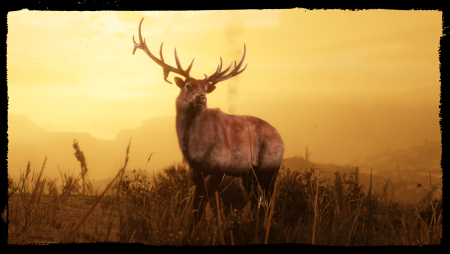 Для Red Dead Online вышло крупное обновление. Рассказываем о новой роли натуралиста