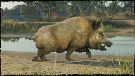 Red Dead Online: превращение в кабана и золотой медведь